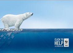 A tan sòlo un click de salvar a este osito polar.    Desde Rusia nos traen esta iniciativa:    http://allforbear.com/