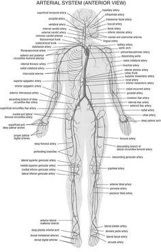 arterial system_black