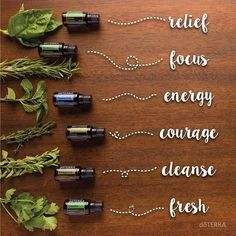 From herb, to bottle, to body. Herbal essential oils aren't just for cooking. Use these herbal essential oils to balance your body and discipline your mind. #doterra #essentialoils #herbs #mentalhealth