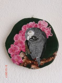 Parrot on wood