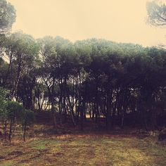 @jmigsimoes Farrusco | Winter mist.