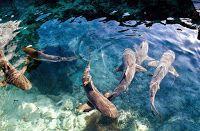 Travel Karimunjawa, The Maritime Charming Destinations in Indonesia Destinations, Travel, Viajes, Traveling, Trips, Travel Destinations