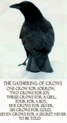 Crone Cronicles: Crow divination