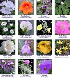 Let Our Garden Markers Help You Grow A Beautiful Array of Edible Flowers! Edible Plants, Edible Flowers, Edible Garden, Diy Flowers, Edible Art, Flower Ice Cubes, Flower Chart, Flower Food, Incredible Edibles