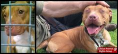 The Animal Team Retweeted  Labour Animal Rights @LabourAnimalRG  Jun 25 GREAT NEWS! Stella who was kept two years on death row without exercise is free and rehomed. http://www.bbc.co.uk/news/uk-england-devon-36600962 …