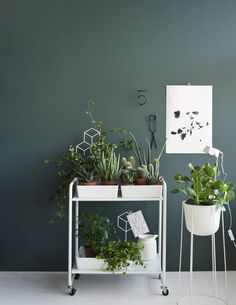 Interior inspiration: green plants at home. House Design, Paint Colors, Deco, Decor, Indoor Plants, Inspiration, Home, Interior, Home Decor