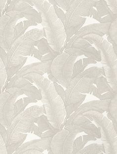 Teide Grey (258 C02) - Paper Moon Wallpapers - This stylish wallaper features a modern broad fern leaf design in a soft grey and white colour combination on a fashionable satin finish. Other colour ways available. Paste the wall product. Please request a sample for true colour match.