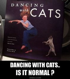 Dancing with cats.. is it normal ??