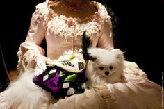 Dog Fashion Show Held Ahead Of the 2012 Westminster Kennel Club Dog Show
