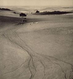 John B. Eaton Cattle Tracks, 1935 Gelatin silver print [From the Art Gallery of New South Wales] New Topographics, Gelatin Silver Print, Photo B, Tree Of Life, Cattle, Fine Art Photography, Art Gallery, Track, Things To Come