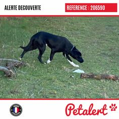05.02.2020 / Chien / Décines-CharpieuRhône / France France, Dogs, Dog, Animaux, Pet Dogs, French, Doggies