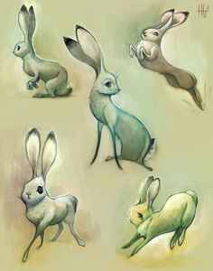Jack Rabbit Sketches by Heather Gross