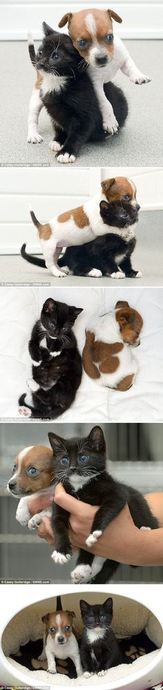 Kitty the Cat and Buttons the Jack Russel think they're sisters after being put together in Rescue Center.