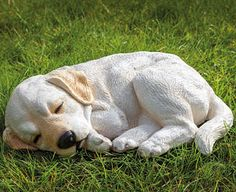 Original Gift Company Sleeping Dog Ornament, Polyresin/Polystone Lay this beautifully cast dog ornament in a special place so that you can keep an eye on him throughout the day. An original gift for any dog lover, the Labrador pup is expertly hand-painted to captur http://www.MightGet.com/february-2017-2/original-gift-company-sleeping-dog-ornament-polyresin-polystone.asp