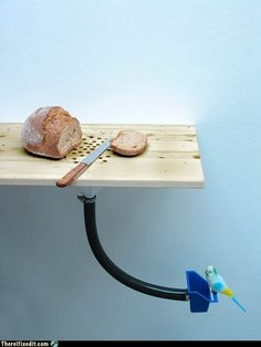 crumb table for you and your bird