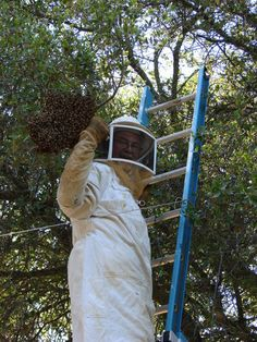 We specialized in bee hive removal services in #Tampa, #St_Petersburg and #Clearwater. We works in eco-friendly manner with live honey bees removal and bee rescue. #Eco_bee_removal #honey #bees #food