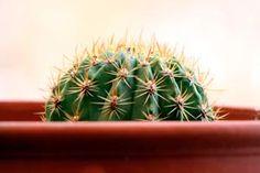 El cactus es una planta ideal para los que no prestan atención a su mantenimiento. Pero a pesar de ser resistentes, pueden llegar a morir si no cumplimos con ciertos cuidados.