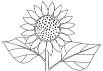 Sunflower Coloring Page for preschool and kindergarten children. Full size available from www.kigaportal.com