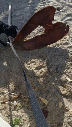 Heart Palm Frond ❤ Surfers Point, San Buenaventura,  CA
