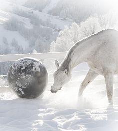 Pferd spielt mit dem Ball im tiefen Schnee.