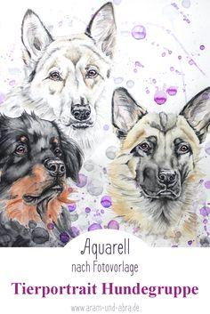 Zeichnung Aquarell Tierportrait Illustration: Hunde Husky Hovawart Malinois nach Foto by: Aram und Abra