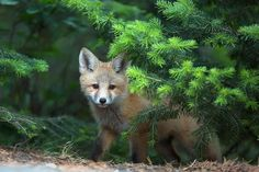 The Daily Cute: 12 Foxy Photos That ARE Safe for Work