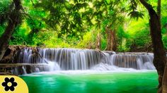 Mural – Waterfall Feng Shui – Wall Picture Decoration Nature Jungle Scenery Paradise Vacation Thailand Asia Wellness Spa Relax Wallposter Photo Wallpaper x 55 Inch / 210 x 140 cm) Xxl Poster, Foto Poster, Meditation Musik, Relaxation Meditation, Spiritual Meditation, Deep Relaxation, Images Murales, Waterfall Wallpaper, Meditation Music