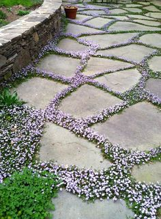 flowering ground cover, gardening, landscaping, flowers LOVE the idea of planting low-growing, flowering ground cover between flagstone pavers, I'd use the one in the picture, or purple thyme or something like Sweet Vernal grass (vanilla scented) #LandscapeFlowers