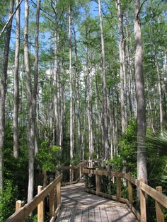 i have to go here when we go next month for my birthday! Calusa Nature Center - Fort Myers, Florida
