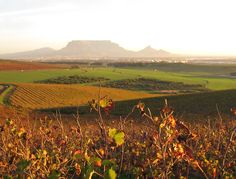 Welbeloond | Venues & accommodation Wineries, Days Out, Cape Town, Wine Tasting, Summer Days, Event Planning, Vineyard, Africa, Weddings