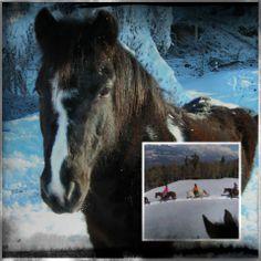 Randonnées hivernales avec cheval ou poney avec Katia Winter walks with horse or pony with Katia #auvieuxbourgmase #randonnées #cheval #poney #valdherens #suisse