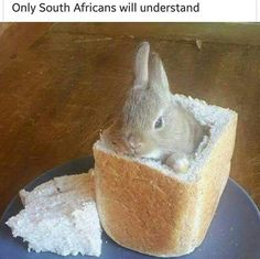 Time For A Bunny? Durban South Africa - Home Of The Bunny Chow! *no real bunnies were harmed — Steemit Durban South Africa, South Afrika, African Jokes, Cute Small Animals, You Broke Me, Cute Creatures, Chow Chow, Animal Memes, Easter Eggs