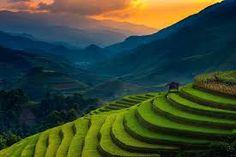 Risultati immagini per rice field sunset