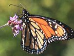 Plants That are Butterfly Magnets in the Garden | TreeHugger