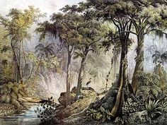 A forest picture by painter Johann Moritz Rugendas, 1821 Botanical Drawings, Botanical Illustration, Johann Moritz Rugendas, Palm Tree Art, Colonial Art, Forest Pictures, Colonial America, Some Pictures, Sculpture