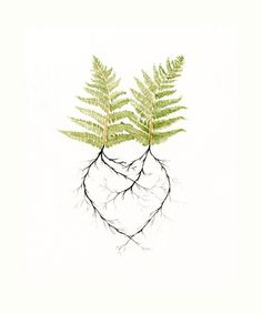 "Cait! this made me think of you and ""Fern! Art Print - Two Ferns in Love - Print of Watercolor - Heart - Earth Day - Nature Romantic - Woodland Forest Roots - Newlywed Gift Idea. $20.00, via Etsy."