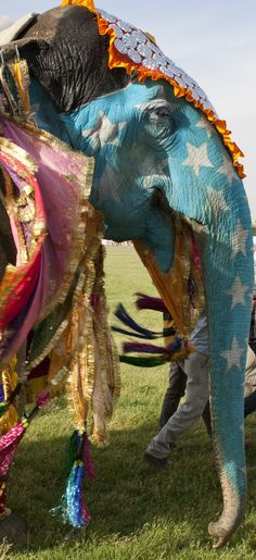 Inspired by Matisse - The Horse, the Rider and the Clown. Elephant Festival in Jaipur.
