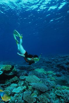 See related links to what you are looking for. Swimming Diving, Padi Diving, Real Life Mermaids, Deep Photos, Scuba Diving Equipment, Diving Course, Water Activities, Underwater World, Sea World