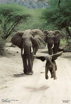 Elephant calf jumps for joy :)