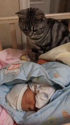 How wonderful it is for a child to grow up with a cat ❤️ - Tiere / pet / animal - Katzen Funny Animal Videos, Cute Funny Animals, Cute Baby Animals, Funny Cute, Animals And Pets, Cute Cats, Pretty Cats, Videos Funny, Viral Videos