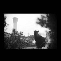 https://flic.kr/p/BCa6JY   Chibi November 2015  #cat #photograph #blackandwhitephotography