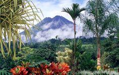 Pod ochroną  Gdzieś pomiędzy Nikaraguą a Panamą znajduje się pasek lądu, który rozdziela wody Pacyfiku i Morza Karaibskiego. To Kostaryka - zakątek świata, który skutecznie opiera się cywilizacji, a tutejsza natura jest równie dziewicza jak 1000 lat temu. Witajcie w krainie u podnóża wulkanu, wśród kolibrów i orchidei.