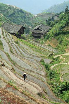 Dragons Back Bone, Longsheng China,