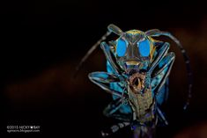 Macro Photographs of Singapore's Most Unusual Insects and Arachnids by Nicky Bay | Colossal