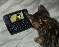 Before you know it you cat will be asking for his own phone...