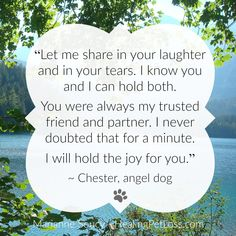 Receive a Spiritual Message from YOUR Pet in the Afterlife Animal Communication, Spiritual Messages, Pet Loss, Animal Quotes, Chester, Grief, Did You Know, You And I, Knowing You