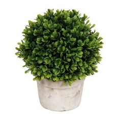 $9.99 At Home Picture of Boxwood in White Pot 9-in