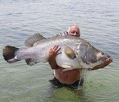 Sport Fishing in Uganda From Africa Nature Trekkers - Fliegenfischen Fishing Life, Sport Fishing, Gone Fishing, Best Fishing, Fishing 101, Fishing Reels, Ocean Monsters, River Monsters, Lake Monsters