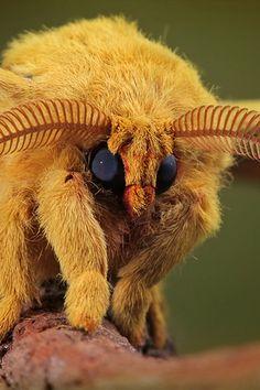Oh my gosh this is so cute. I love moths.