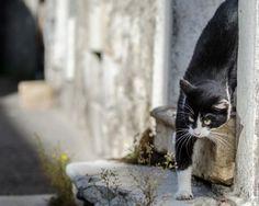 Le chat by Aleš Hrabě